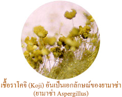 เชื้อราโคจิ (Koji) อันเป็นเอกลักษณ์ของยามาซ่า ยามาซ่า Aspergillus)